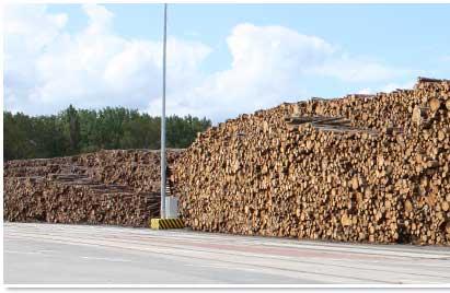 Sägeholz gestapelt im Rostocker Hafen