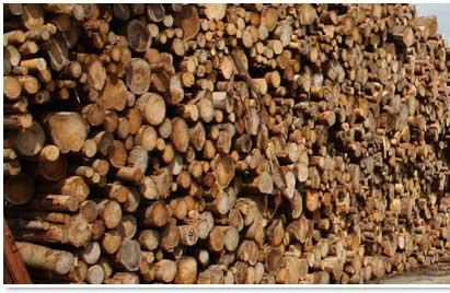 Holzpier im Rostocker Hafen